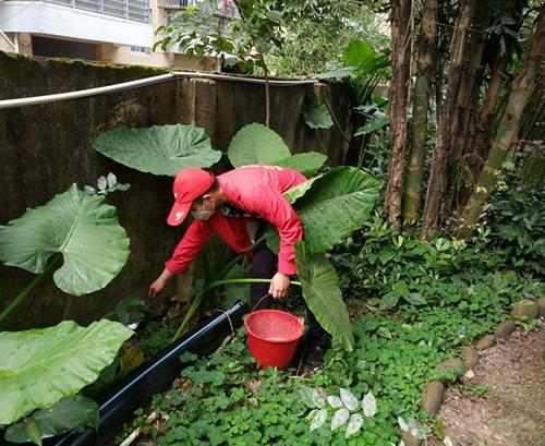 專業紅火蟻防治