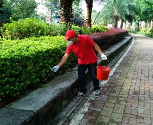 專業螞蟻防治