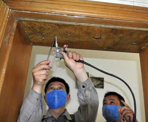 家庭、公寓、物業蟲害防治